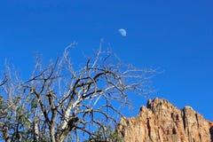 Кемпинг наблюдателя, национальный парк Сиона Стоковое Изображение