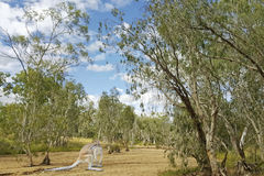 Кенгуру в австралийском кусте Стоковое фото RF