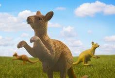 3 кенгуру на луге Стоковые Изображения