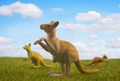 3 кенгуру на луге Стоковые Изображения RF