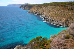 кенгуру острова береговой линии Австралии южный Стоковые Изображения