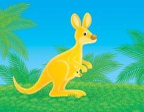 кенгуру Стоковая Фотография RF