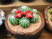 Керамика кактуса стоковое фото rf
