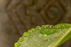 Керамическая деталь бутылки лозы Стоковое Фото