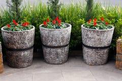керамические вазы завода Стоковые Изображения