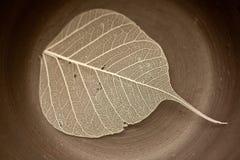 керамические листья Стоковые Изображения RF