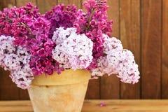 Керамический бак с ветвью цветка сирени на деревянной предпосылке Стоковая Фотография