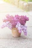 Керамический бак с ветвью цветка сирени Стоковое Изображение RF