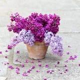 Керамический бак с ветвью цветка сирени Стоковые Фотографии RF