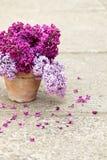 Керамический бак с ветвью цветка сирени Стоковые Изображения RF