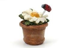 керамический цветок стоковые фото