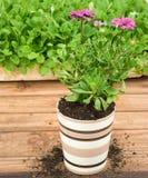 керамический цветочный горшок Стоковое Фото