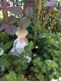 Керамический лягушки Стоковая Фотография RF