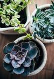 3 керамических бака с различными красочными суккулентными заводами Стоковые Фотографии RF