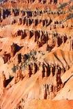 Кедр ломает горные породы Юту Стоковые Фото