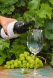 Кельнер лить стекло льда - холодного белого вина, открытая терраса, Стоковые Изображения RF
