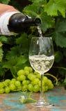 Кельнер лить стекло льда - холодного белого вина, открытая терраса, Стоковые Фотографии RF