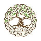 Кельтское дерево жизни Стоковые Изображения