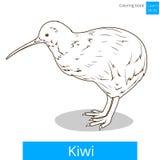 Киви учит вектор книжка-раскраски птиц Стоковое Изображение