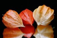 киец fruits фонарик Стоковое Изображение