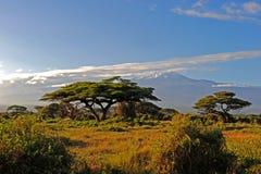 Килиманджаро Кения Стоковое Фото