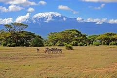 Килиманджаро Стоковые Фотографии RF