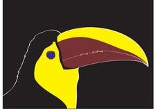 киль счета toucan Стоковое Изображение