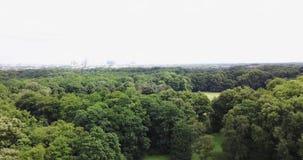 Кинематографическая съемка зеленого поля с деревьями видеоматериал