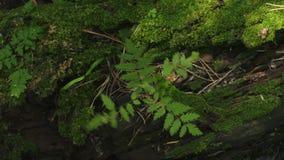 Кинематографический видео- вращая взгляд сверху с сиротливым деревом растя от мха видеоматериал