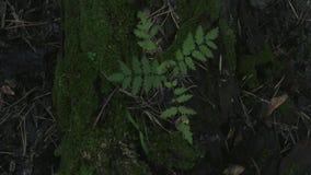Кинематографическое видео в движении сверху с сиротливым деревом растя от мха сток-видео