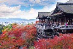 Киото, Япония - 25-ое ноября 2016 - красивая осень c Momiji Стоковое Изображение RF