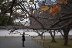 Киото k Стоковое Фото