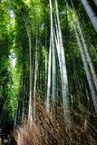 Киото lanshan, Япония стоковое изображение