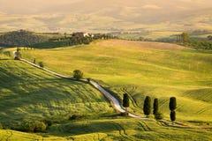 Кипарисы вдоль bianca strada дороги гладиатора в Тоскане Стоковое Фото