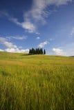 кипарисы Тоскана Стоковое Фото