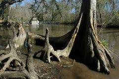 Кипарис в воде на парке штата Fairview-берега реки стоковые фотографии rf