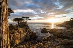 кипарис уединённый Стоковое Фото