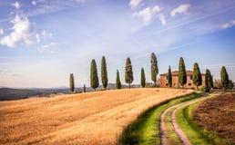кипарис tuscan Стоковые Фотографии RF