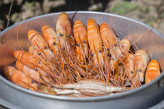 Кипеть креветка и краб в рынке, Таиланде Стоковые Изображения RF