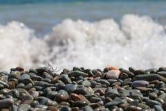 Кипеть креветка на камешке морем Стоковое Фото