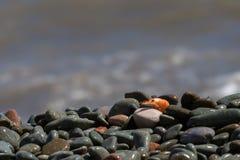 Кипеть креветка на камешке морем Стоковые Изображения