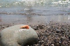 Кипеть креветка на камешке морем Стоковое Изображение RF