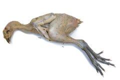 Кипеть цыпленок Стоковые Изображения