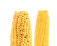 Кипеть corns на белой предпосылке. Стоковые Фото