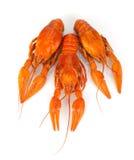 3 кипеть crayfishes Стоковые Изображения RF