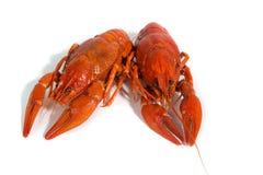 2 кипеть crayfishs на предпосылке белизны изолята Стоковое Изображение RF