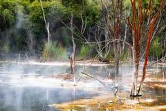 Кипя горячее вулканическое озеро с мертвыми ветвями вставляя из воды стоковые фотографии rf