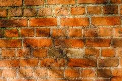 Кирпичная стена близкая вверх с dappled солнечным светом стоковое фото rf