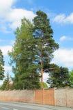 Кирпичная стена вокруг парка Стоковое Изображение RF