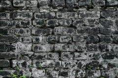 Кирпичная стена в черно-белом Стоковые Изображения